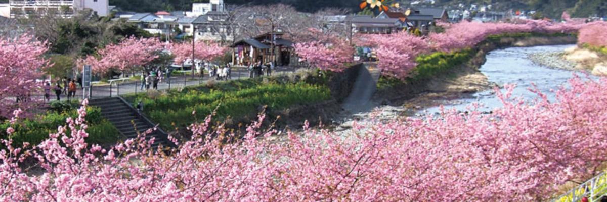 kawazu japan